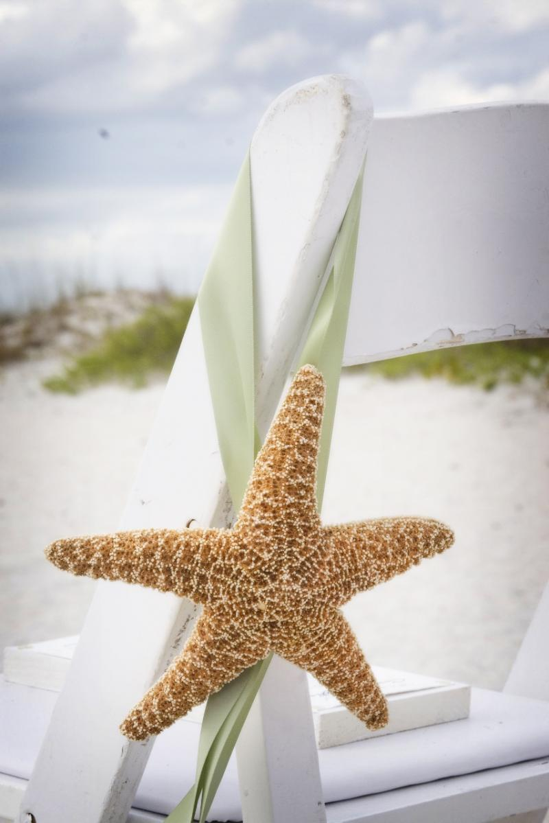 Starfish_chair.60133331_std.JPG